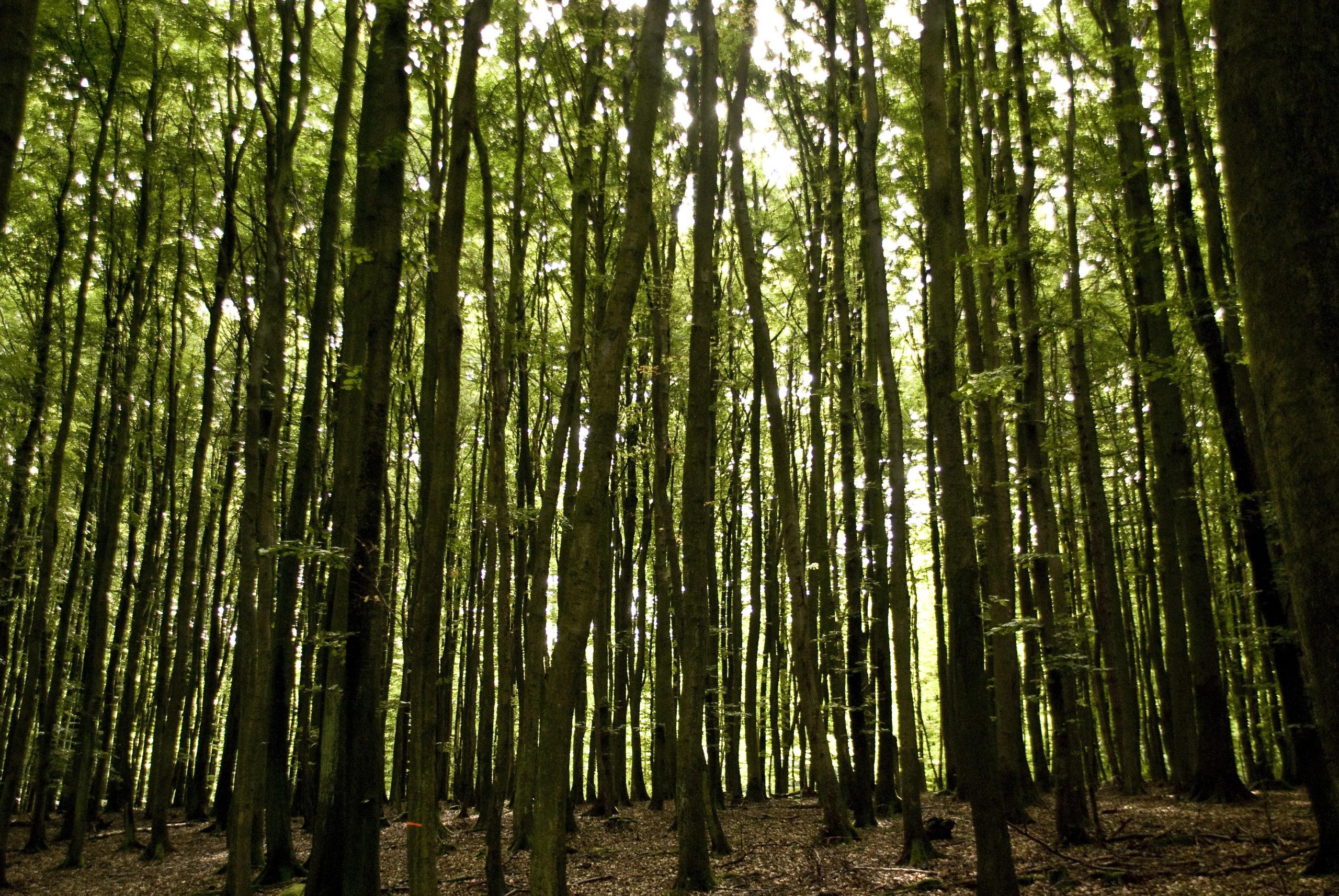 Koronawirus. Nadleśnictwa wprowadzają zakaz wstępu do lasów